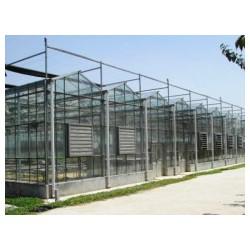 温室大棚建造厂家_提供业的建设大棚